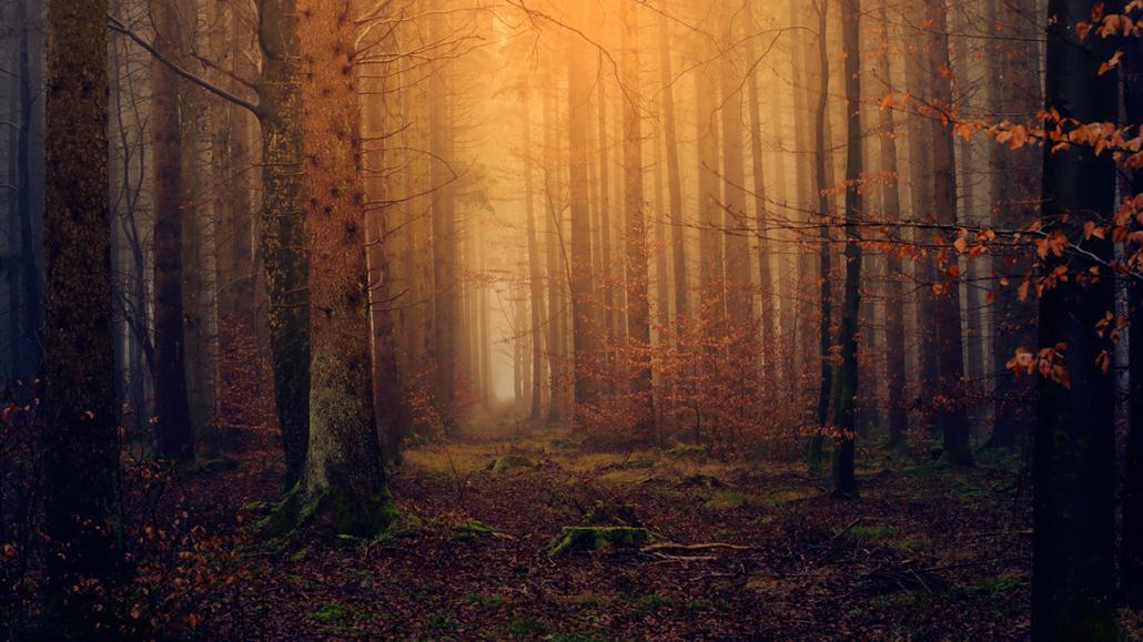 Spanndecken Motiv 04-105 | Natur | Landschaft | Wald | Bäume | Wandmotiv