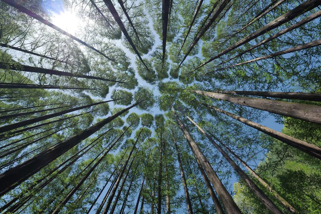 Spanndecken Motiv 04-113 | Natur | Landschaft | Deckenmotiv