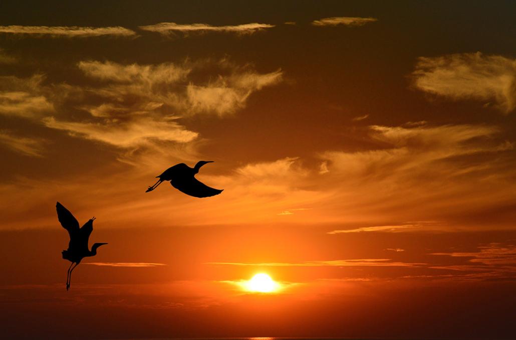 Spanndecken Motiv 02-104 | Sonnenuntergang | Ambiente | Natur