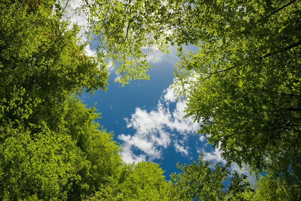 Spanndecken Motiv 07-103 | Natur | Landschaft | Deckenmotiv