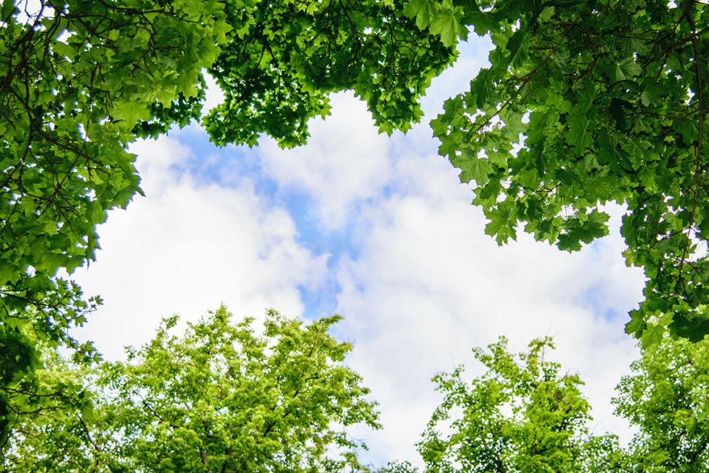 Spanndecken Motiv 07-108 | Natur | Landschaft | Deckenmotiv
