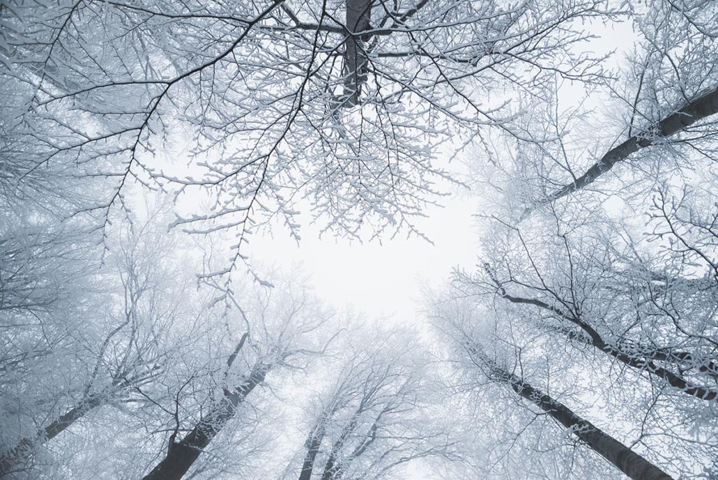 Spanndecken Motiv 07-110 | Natur | Landschaft | Deckenmotiv