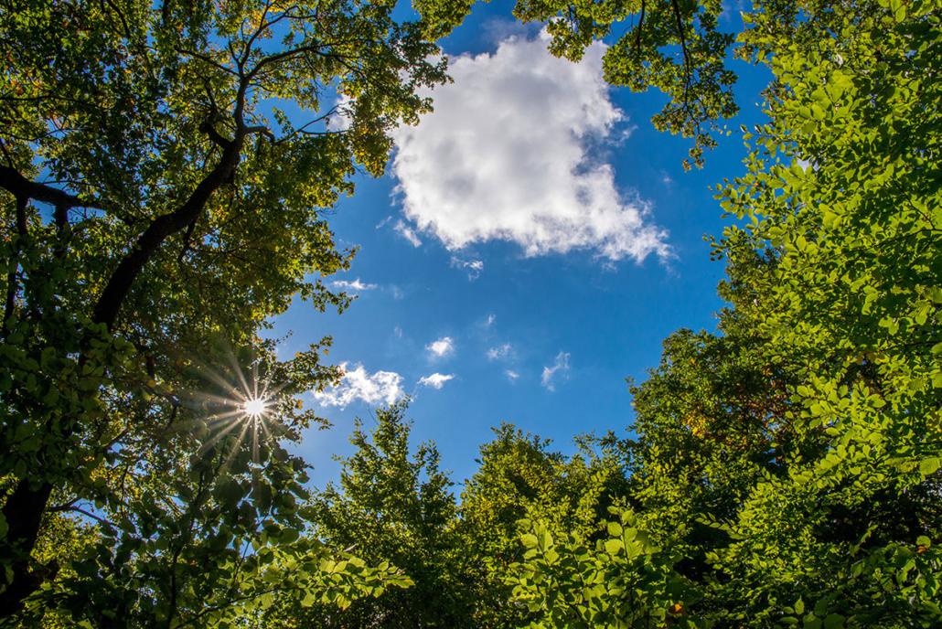 Spanndecken Motiv 07-111 | Natur | Landschaft | Deckenmotiv