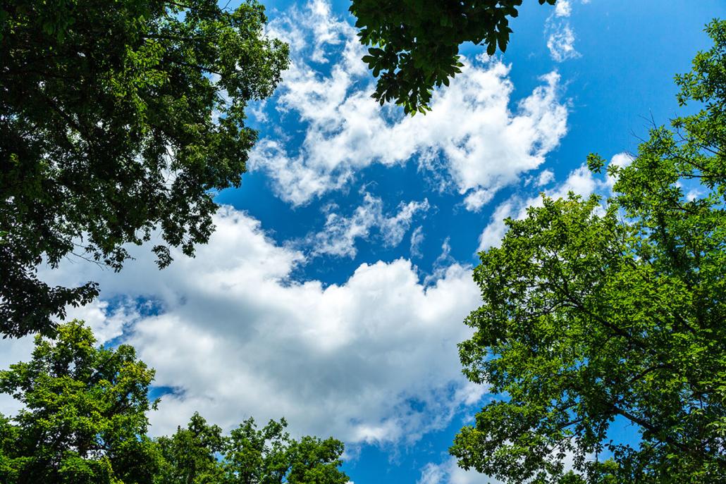 Spanndecken Motiv 07-122 | Natur | Landschaft | Deckenmotiv